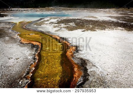 Yellow Sulfur Stream Flows From Steaming Hot Spring In Yellowstone National Park, Usa