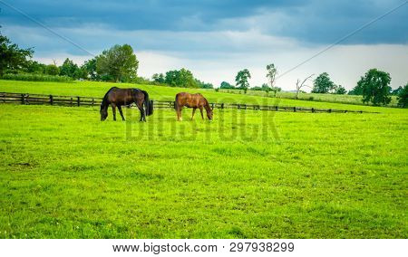 Horses grazing on a farm in Central Kentucky