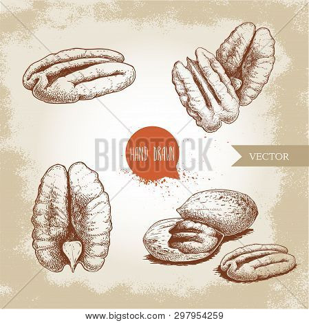 Pecan Nuts Set. Peeled Core And Whole Shell Composition. Hand Drawn Sketch Style Vector Collection.