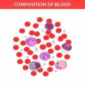 Composition of blood: red and white cells, platelets under a microscope. Medical vector concept on white background. poster