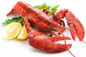 Lobster with parsley and lemon slices over white poster