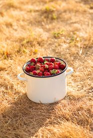 Ripe Strawberries With Leaves In Old White Pan On Dry Grass On Blurred Background