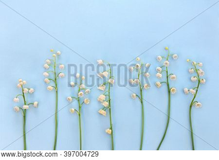 White Flowers Lily Of The Valley ( Convallaria Majalis, May Bells, May Lily ) On A Blue Paper Backgr