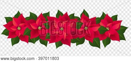 Red Poinsettia Isolated Garland With Green Leaves Transparent Background With Gradient Mesh, Vector