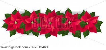 Red Poinsettia Isolated Garland With Green Leaves White Background With Gradient Mesh, Vector Illust