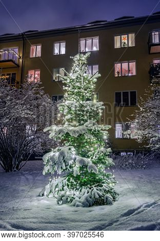 Christmas Tree in Snow, Sweden