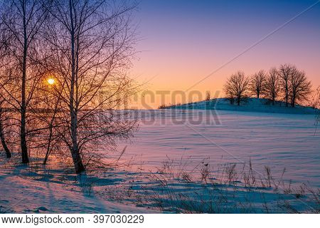 Winter Rural Landscape In The Evening. Frosty Weather. Trees On The Field At Sunset Light