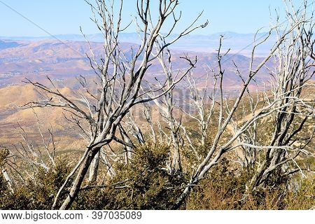 Parched Branches On Burnt Chaparral Plants Caused From A Past Wildfire At A Mountain Ridge Overlooki