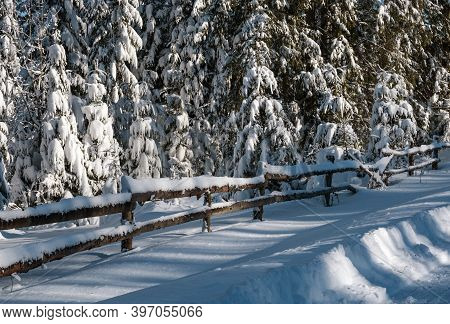 Alpine Mountain Snowy Winter Fir Forest And Snow Drifts Near Wood Fence On Secondary Countryside Roa