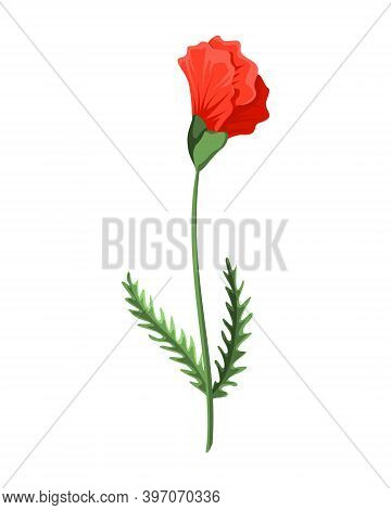 Bud Poppy Flower. Watercolor Hand Drawn Poppy. Isolated Botanical Symbol Of Blooming Red Poppy Bloss