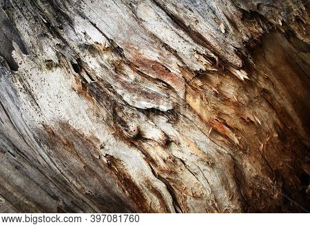 Abstract Detail Of Decomposing And Rotting Wood
