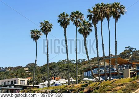 San Diego, America - May 13, 2014:palm Trees On The Beach In San Diego,california,america.