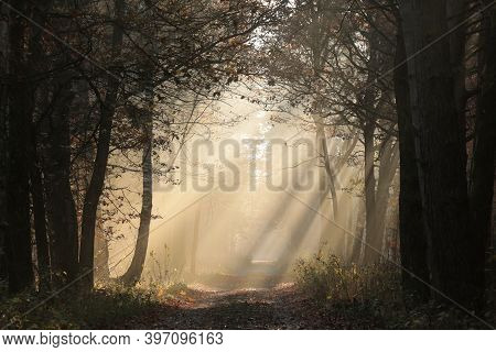 Path Nature autumn forest sunrise landscape Nature background landscape Nature landscape trees Nature background landscape woods Nature landscape Nature background fog Nature landscape Nature background Nature background light landscape Nature background.