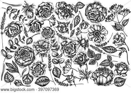 Vector Set Of Hand Drawn Black And White Roses, Anemone, Eucalyptus, Lavender, Peony, Viburnum Stock