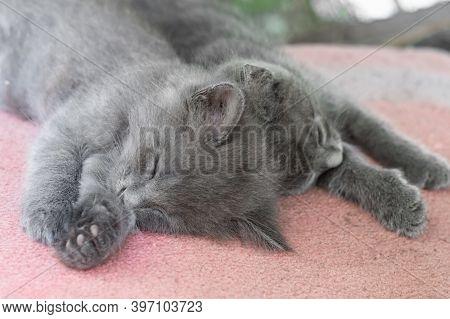Two Gray Fluffy Kitten Sleeping Side By Side