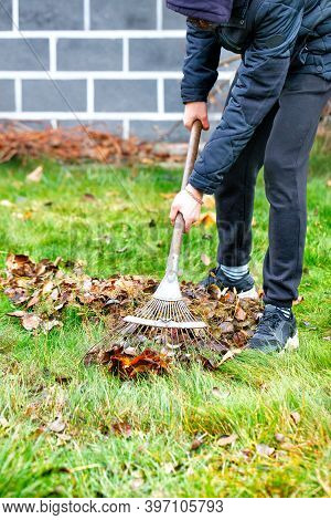 The Gardener's Hands Take Care Of The Green Lawn, Raking Fallen Leaves From The Green Grass With A M