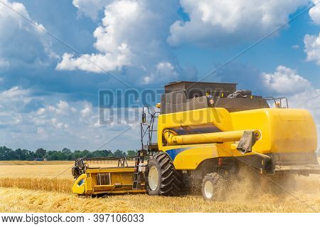 Grain Harvesting Combine In A Sunny Day. Yellow Field With Grain. Agricultural Technic Works In Fiel