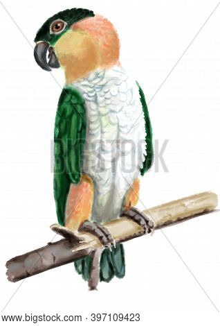 Black-headed Parrot. Realistic Hand Drawn Illustration Of Tropical Bird Isolated On White Background