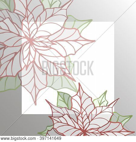 Postcard Template With Decorative Flowers. Floral Background. Stylized Poinsettia. Vector Illustrati