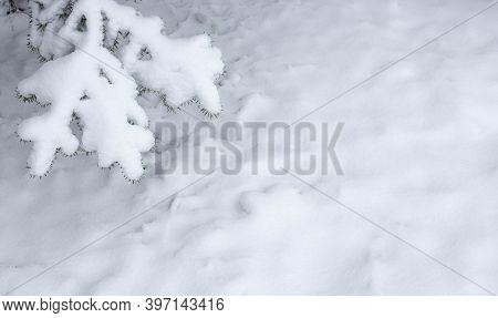 Christmas Fir Branch In Snow Close Up. Snow Fir Branch In Forest. Road In The Snow Winter Forest. Ru