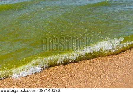 Dirty Sea With Green Algae. Seasonal Bloom Of Sea Water.