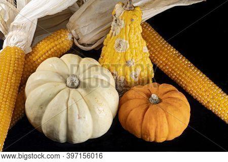 Vibrant Colors Of Autumn Harvest Including Gourd, Pumpkins And Corn Cobs Against Black