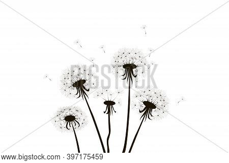 Vector Illustration Of Dandelions. Black Silhouette Of Flowers. Dandelions With Flying Seeds.