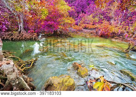 Colorful Majestic Emerald Pool Is Unseen Pool In Mangrove Forest Majestic Autumn Trees Glowing By Su