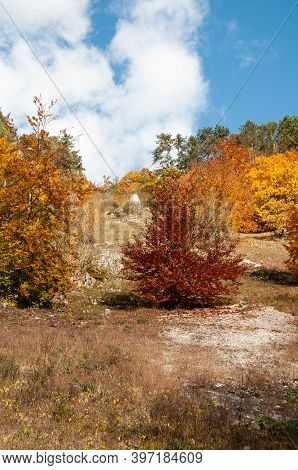 Trees In Autumn Leaf Colors On Stony Soil In Swabian Alb In Germany