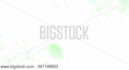 Green Flower Petals Falling Down. Extraordinary Romantic Flowers Corners. Flying Petal On White Wide
