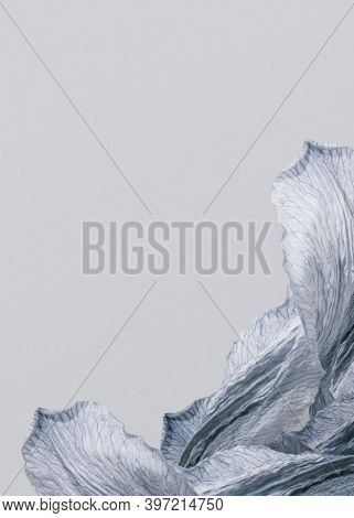 Silvery lily petals gray background