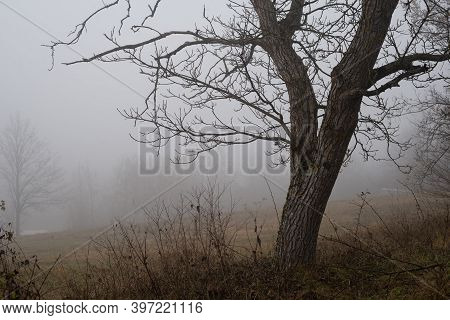 Fog In Nature Landscape. Tree In Winter Fog Nature. Mist And Fog In Mountain Forest Nature. Forest A
