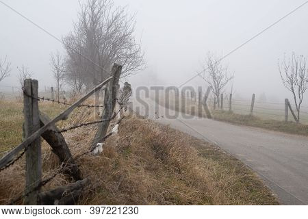Fog In Nature Landscape. Road With Trees In Winter Fog Nature. Mist And Fog In Mountain Road Nature.