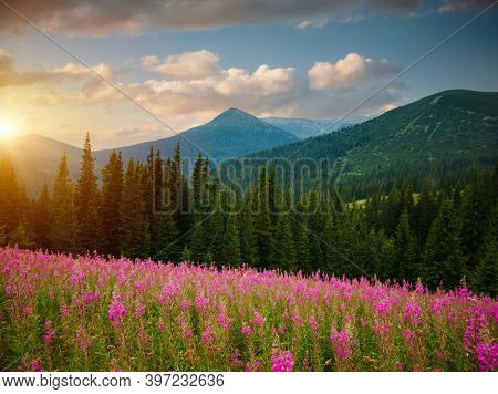 Tranquil summer day with green hills illuminated by the sun. Location place Carpathian mountains, Ukraine, Europe. Vibrant photo wallpaper. Nature photography. Discover the beauty of world.