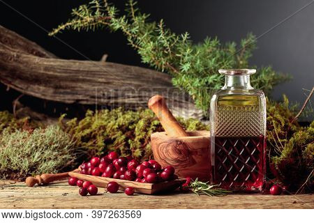Cranberries And Decanter With Cranberry Juice. In The Background Moss, Juniper Branch, And Old Snag.