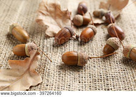 Acorns And Oak Leaves On Sackcloth, Closeup