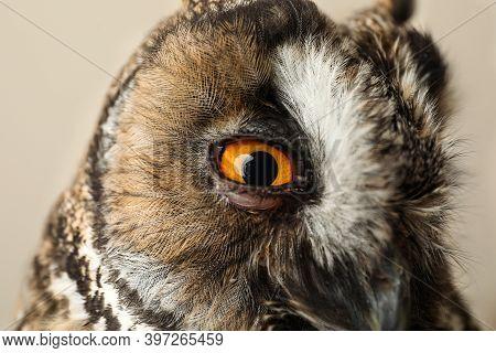 Beautiful Eagle Owl On Beige Background, Closeup. Predatory Bird