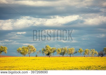 Landscape With Arable Rapeseed Field And A Row Of Trees On The Horizon. Rural Landscape In Early Spr