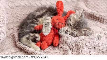 Baby Cat Sleeps On Cozy Blanket Hugs A Toy. Fluffy Tabby Kitten Snoozing Comfortably With Plush Rabb