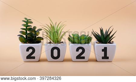 Inscription 2021 On White Ceramic Flowerpots With Houseplants. New Ideas In The New Year. Merry Chri