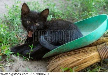 Black Kitten Yawns With His Tongue Out