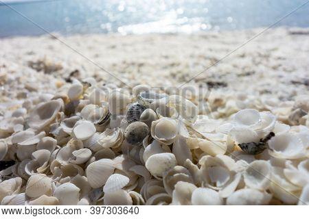Detail Of White Shells At Shell Beach In Western Australia Near The Denham City