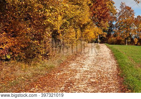 A Gravel Path Alongside A Forest In Autumn Leaf Colors