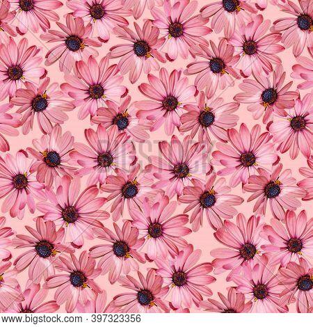Floral Pink Gazania Seamless Pattern On Black Background