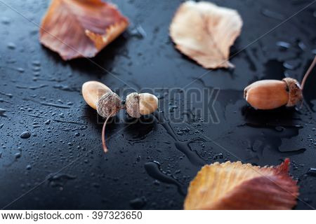 Acorns And Leaves On A Wet Background