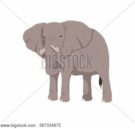 Icon Of African Elephant. Wild Savannah Elephant. Zoo Or Wildlife Theme. Cartoon Vector Illustration