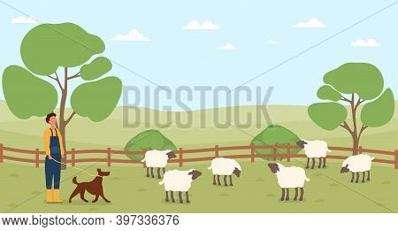 Farmer Working On Countryside Farm. Man With Dog Taking Care Of Domestic Sheep. Rural, Ranch, Countr