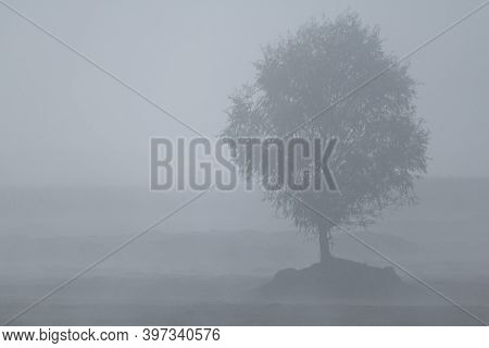 Tree Silhouette In Foggy Morning, Foggy Background