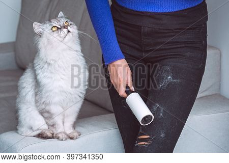 Woman Cleaning Clothes With Clothes Roller, Lint Roller Or Sticky Roller From Cats Hair. Cats Hair O