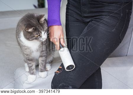 Woman Hand With Clothes Roller, Lint Roller Or Sticky Roller Removing Animal Hairs And Fluff From Fr